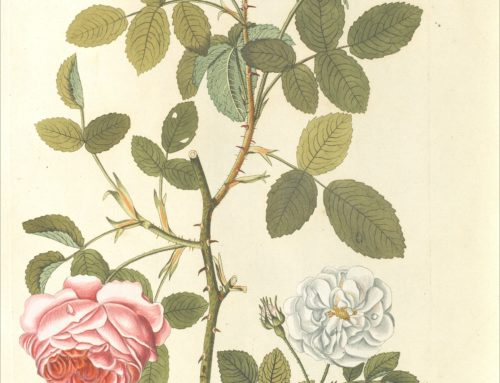 Una biblioteca botanica da riscoprire. Suggestioni e immagini dai libri di Lodovico Caldesi