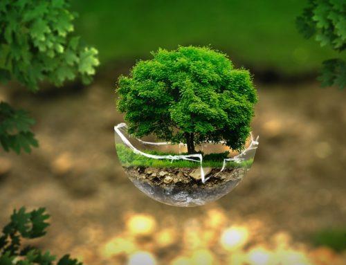 Il segreto è l'ecologia