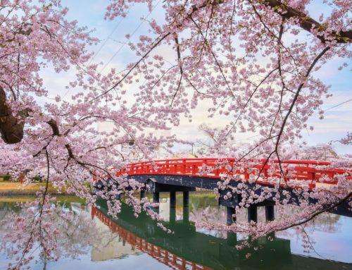 Come un fiore di ciliegioIl Giappone nei romanzi e nei film